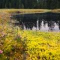 Molhașurile de la Izbuce – the Apuseni peat bogs
