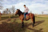 Free Horses Ranch – Echitație în stil WESTERN