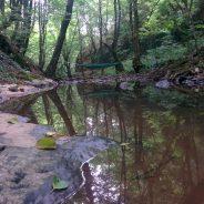 Valea Mişidului – un loc in inima Muntiilor Padurea Craiului